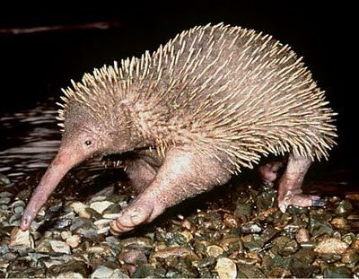 Strange and Ugly Animals ~ UNUSUAL THINGs | Animals - mammals ...