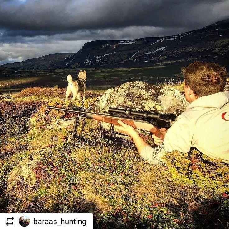 bilde tatt av @baraas_hunting ・・・ Moro å se litt dyrer når vi skulle ta noen bilder • Dixie spoting a deer��✔️ #teamskittfiske #skittjakt #nordiskjakt #hunting #nothingescapesyou #elghund #vornequipment #skittfiskeno #jaktbilder #skittjaktno #norgesjakt #hunt #jagers #norway #liveterbestute #garminnorge #sluttstykket #swedteam #norgesjegere #deerhunting  #steinertsensingsystems #jagd #jagdhund #swarovskioptik_hunting #normanorge #neopod #blaserr8 #jaktmedhund #dovrefjell #elgjakt…