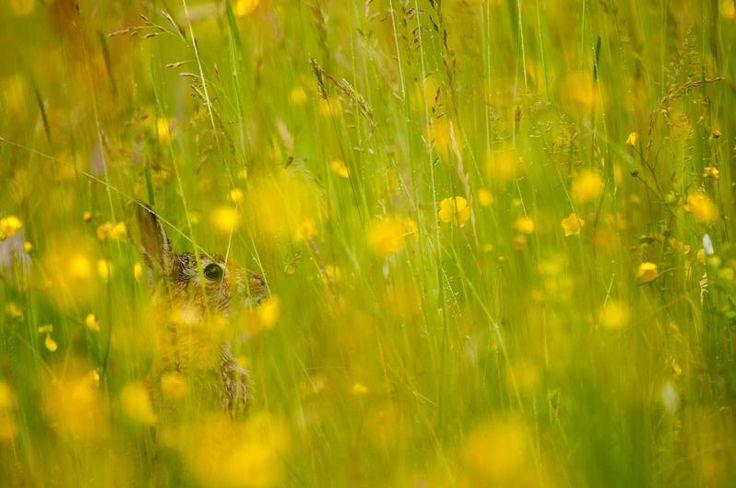 Clattinger Farm flower meadow gallery by Barney Wilczak