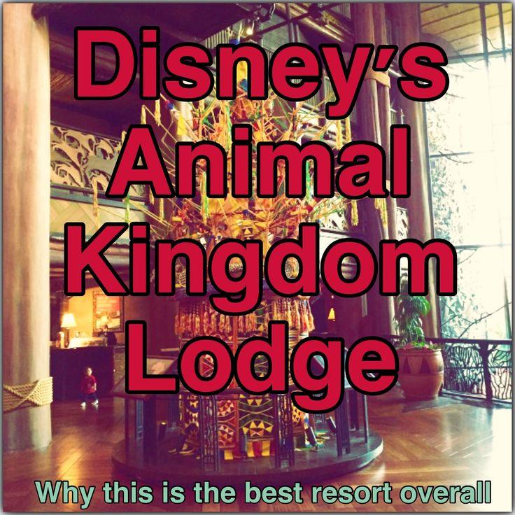 Disney You Re Amazing: 2715 Best Disney Images On Pinterest