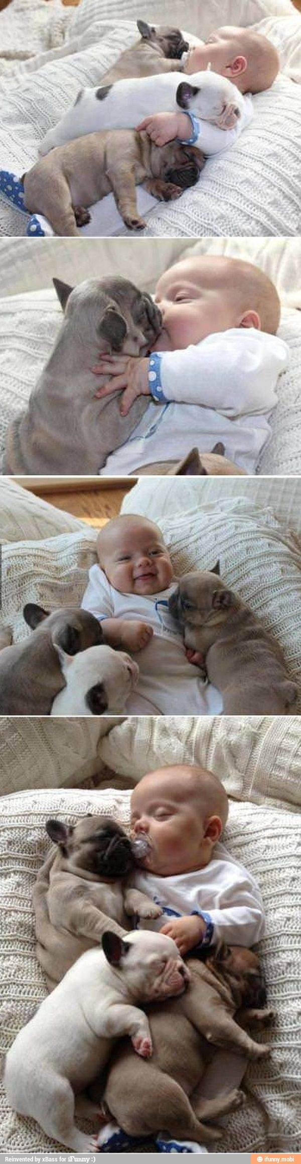 Too much cuteness, a little human and a frenchie puppies. Dying.