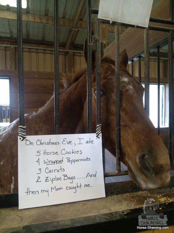 Funny horse animal