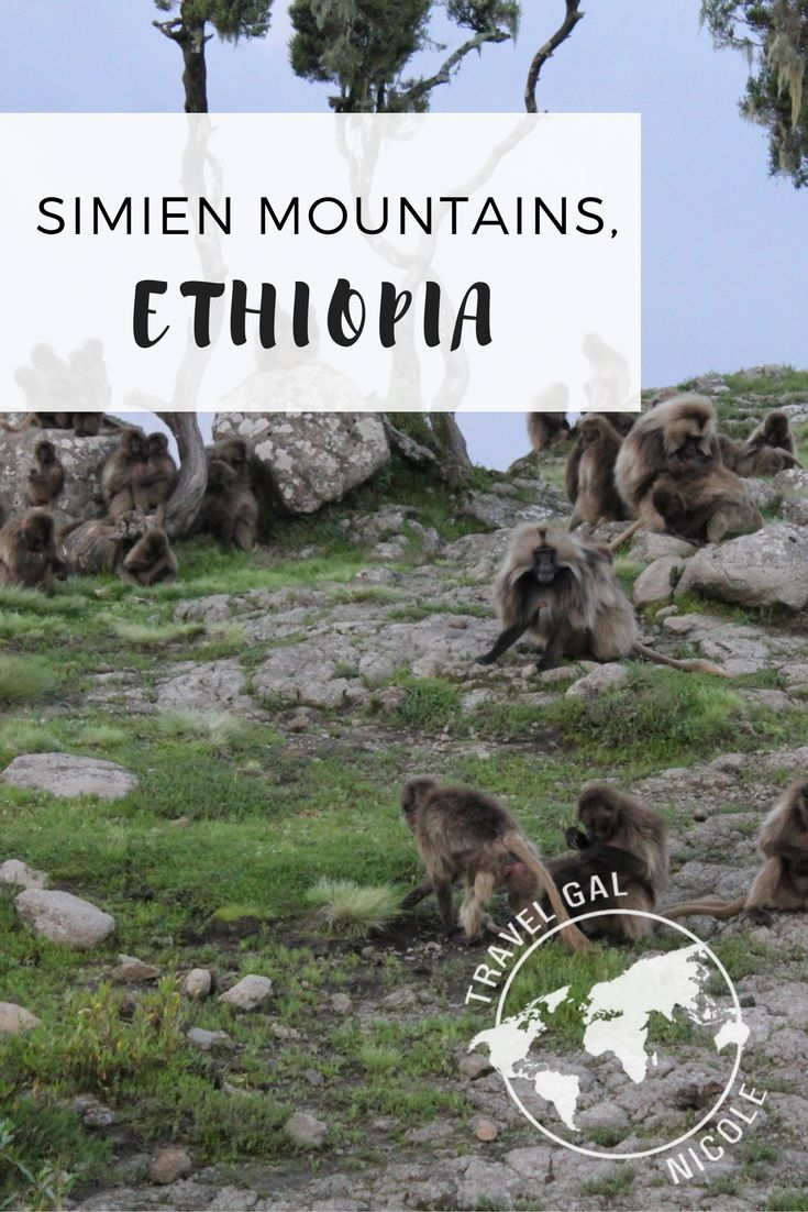 The Simien Mountains are gorgeous. Too bad we went in the wet season and it rained and rained. The main reason to go to the mountains is to see the Gelada Baboons and the waterfall. Since we saw the baboons on the first night and went to the waterfalls the next day we left early back to Gondar to get nice and dry and relax.