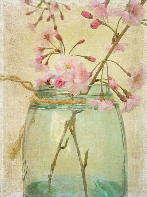 Cherry Blossoms by raewillow, via Flickr