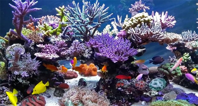 Best 25 reef aquascaping ideas on pinterest reef for Disegni coralli marini