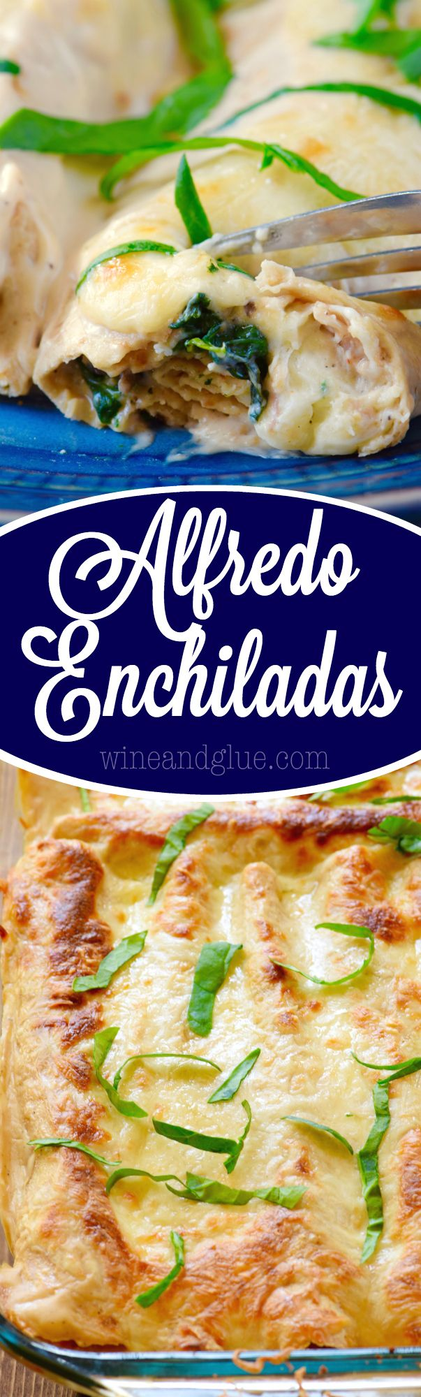 2627 best mexican dishes images on pinterest fiestas kitchens and these alfredo enchiladas are such a delicious and easy dinner to throw together total comfort mexican dinnersmexican food recipesrecipes forumfinder Gallery