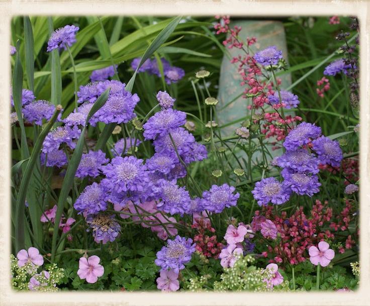 Scabosa, Coral Bells & Geranium
