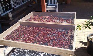The Progress of a solar Fruit Dryer