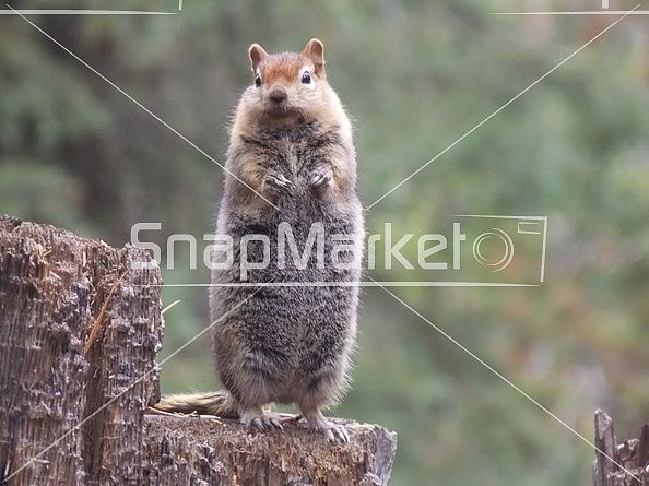 Squirrel Begging for a Snack
