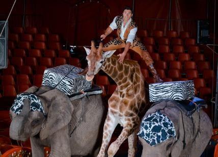 """Festival del Circo di Montecarlo al via Gli animalisti: """"Stop con lo sfruttamento"""""""