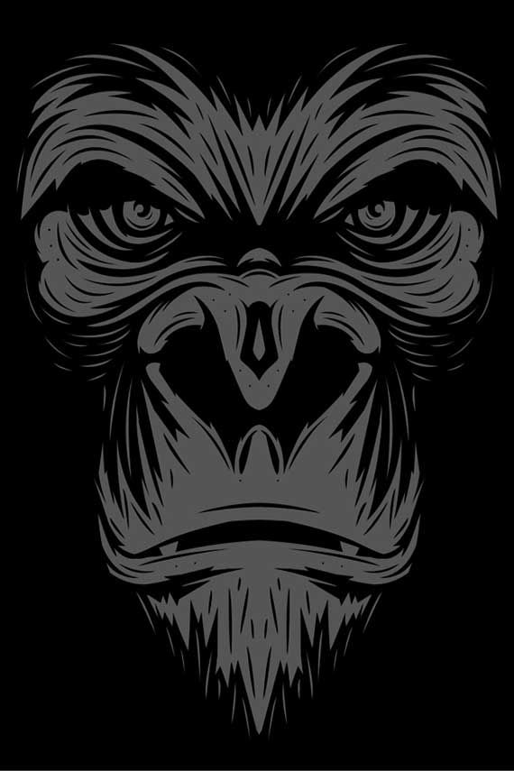 56 best gorilla and monkeys images on pinterest monkeys monkey and sketches. Black Bedroom Furniture Sets. Home Design Ideas
