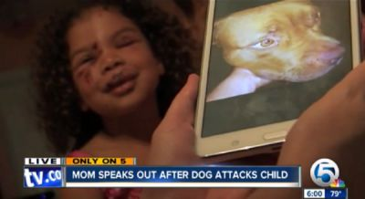 Pit Bull Dog Hero Saves Little Girl from Dog Attack - A Place For Pit Bulls