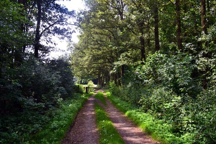 In een prachtige omgeving vlakbij de rivier de IJssel in Angerlo (gemeente Zevenaar) ligt het Bingerdense Bos met fraaie oude bomen. Natuur- en tuinliefhebbers kunnen hier hun hart ophalen. Het bos heeft een oppervlakte van zo'n 8 hectare en is tussen zonsopgang en zonsondergang opengesteld. U kunt hier heerlijk wandelen. Verschillende fiets- en wandelroutes leiden u langs of door het Bingerdense bos.