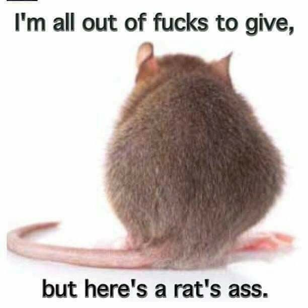 Image result for young girl with don't give a rat's ass