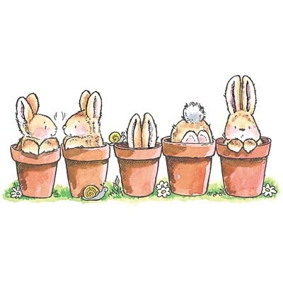 5 potted bunnies