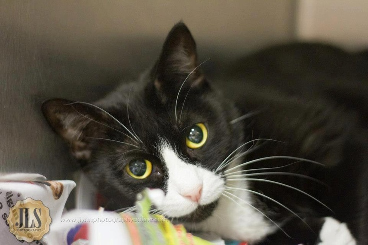MIA! (A19253802) Brought to the shelter when her owner