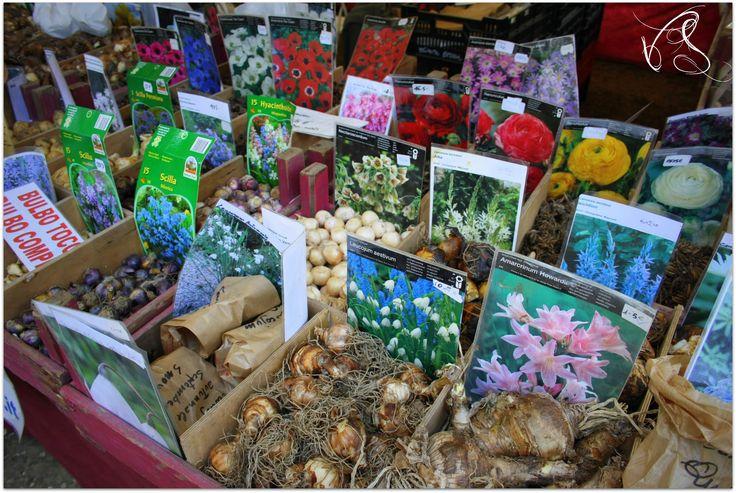 Giardini d'Autore http://www.riccionesocialclub.it/eventi/curiosando-i-giardini-dautore