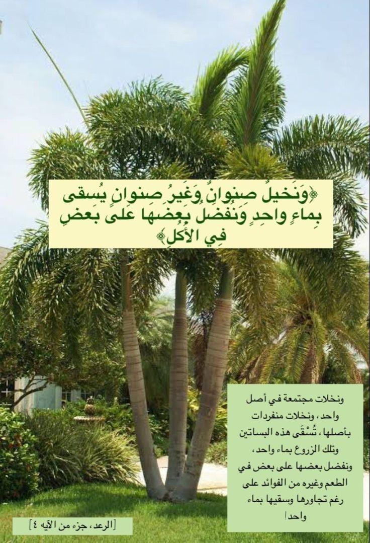 Pin By Seada Husejni On Quran Quotes Quran Quotes Islam Quran Plants