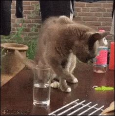 when your free trial runs out. funny cat gif