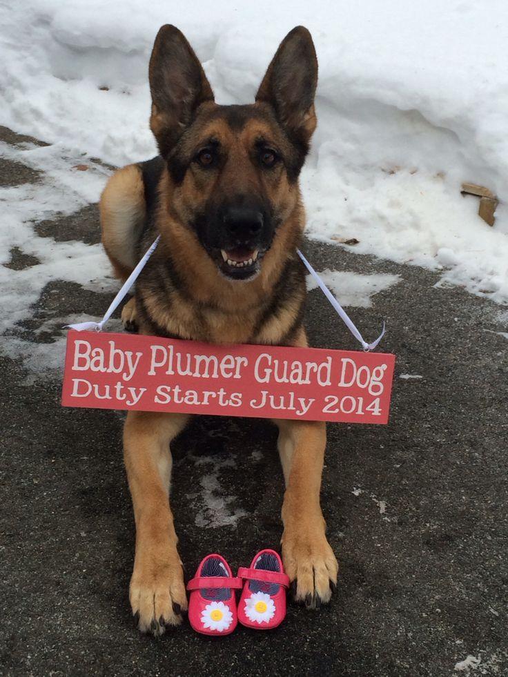 Custom Pregnancy Announcement Sign.  Unique pregnancy reveal idea involving the family dog!  https://www.etsy.com/listing/113983977/custom-pregnancy-announcement-sign-photo?ref=shop_home_active_1