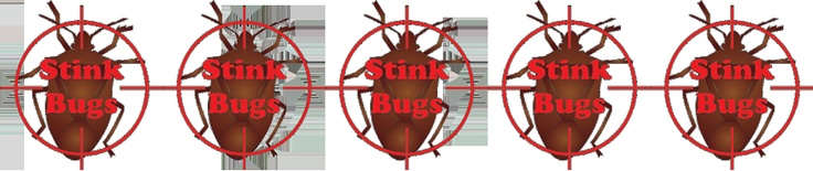 Tips to get rid of Stink Bugs!