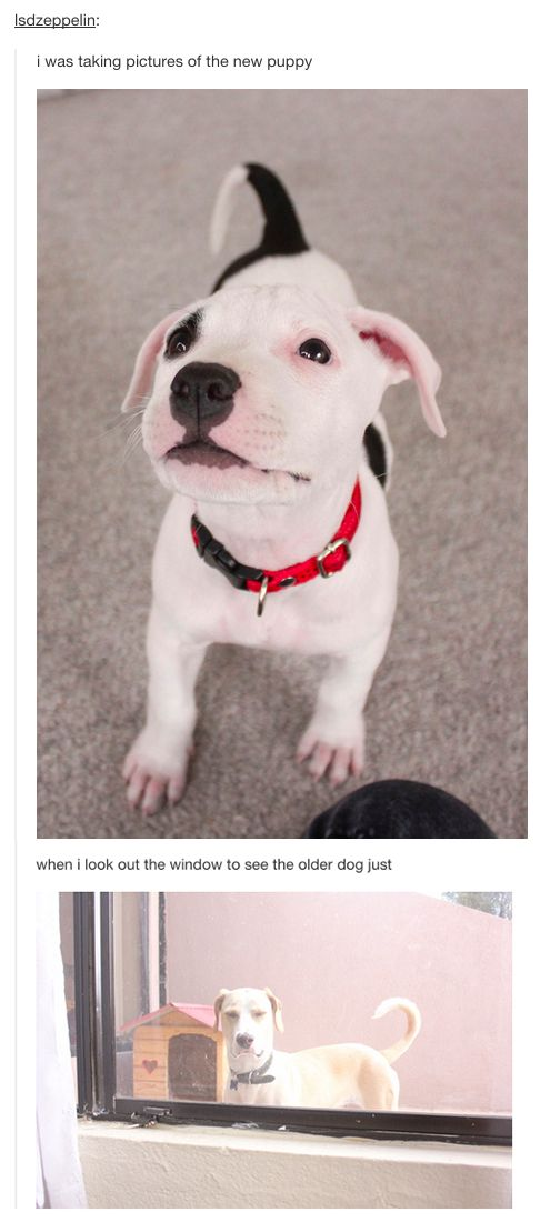 37 Times Tumblr Told The Truth About Dogs - somebody's a bit jealous