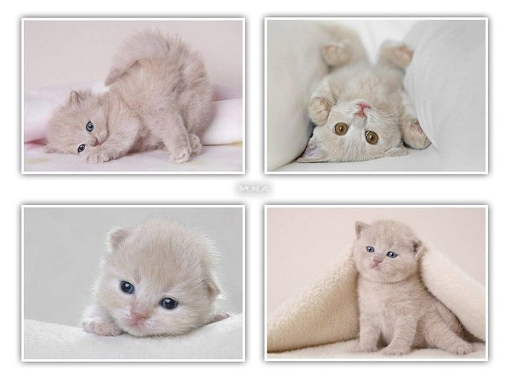 schattig witte katten wallpaper
