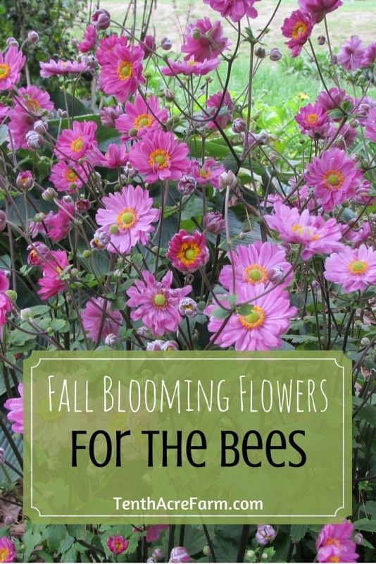 Bees need to store up pollen and nectar to survive winter hibernation. Here are some tips on how to provide bees with the right fall forage to meet their needs.
