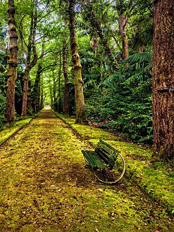 Caldeira Velha Park, São Miguel Island, Azores Portugal