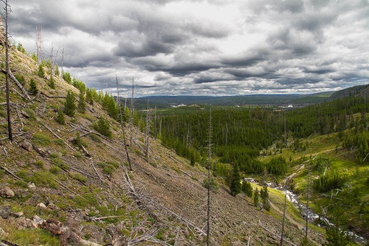 Yellowstone #yellowstone #nationalpark #landscape #trees http://hikersbay.com/go/usa