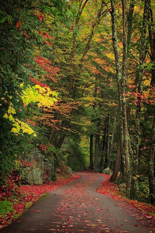 Forest Path, Smokey Mountains, Tennessee