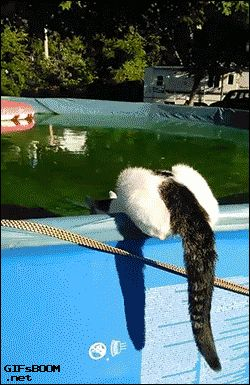 Cat walking on water