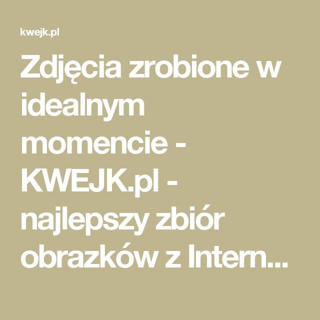Zdjęcia zrobione w idealnym momencie - KWEJK.pl - najlepszy zbiór obrazków z Internetu!