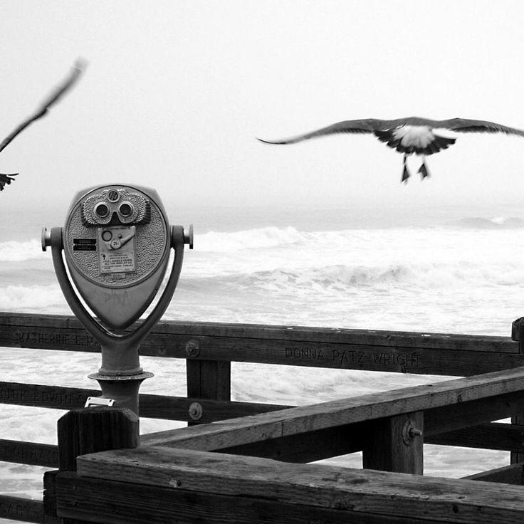 Birds by the beach