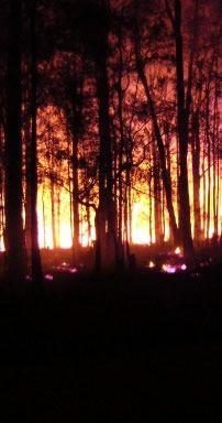 Bush Fire Consultants  NSW Bushfire consultants, risk assessors and fire mitigation.