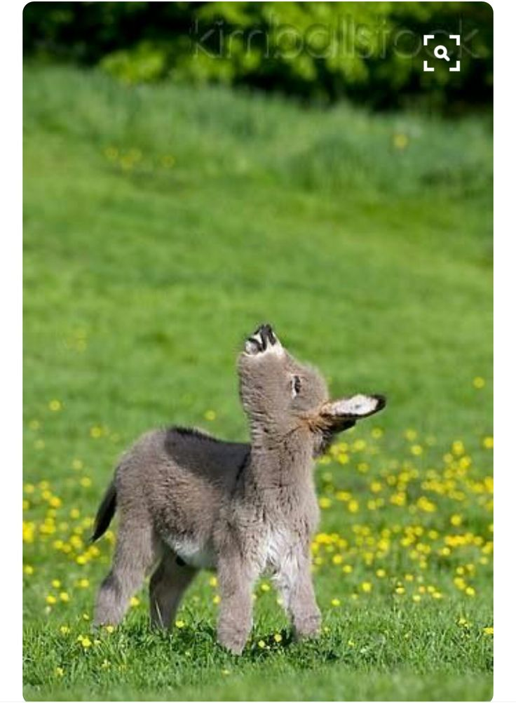 I want a baby donkey and mini horse breeds! Only a baby donkey will do!