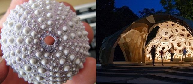 This bionic dome, built by University of Stuttgart's Institute for Computational Design (ICD) and the Institute of Building Structures and Structural Design (ITKE), is modeled on the plate skeleton of a sea urchin.    The result is a structure that is strong as well as lightweight- and pretty cool-looking to boot.