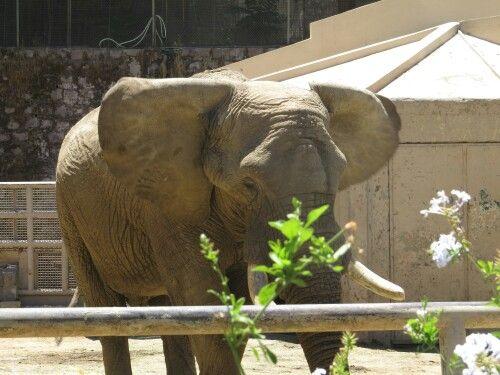 Elefante zoológico Santiago Chile