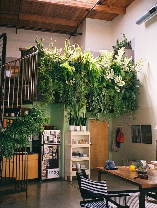 Office with vertical living plant wall