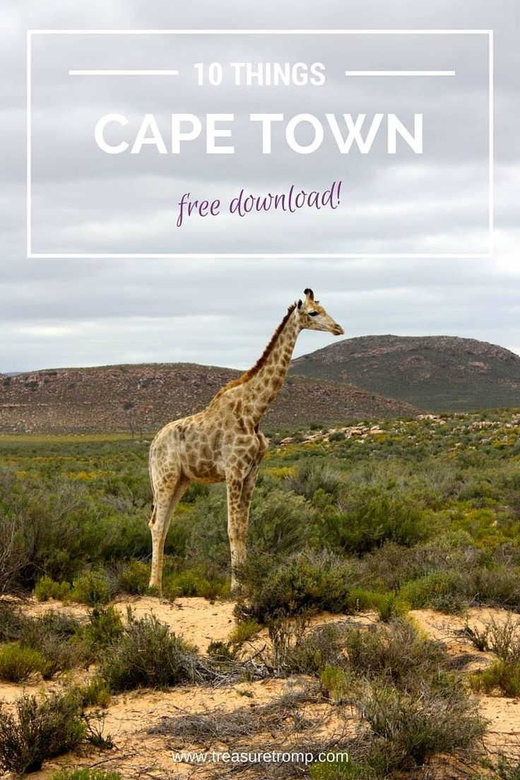 Carnivore Restaurant South Africa Cape Town
