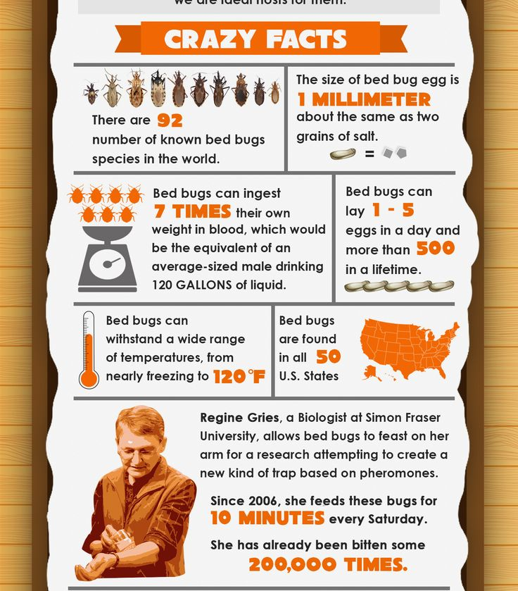 7 Crazy Facts About Bed Bugs Infographic Bed bugs, Bed