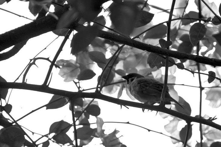 Spot the sparrow. Practicing spot metering. Taken using Nikon D90.