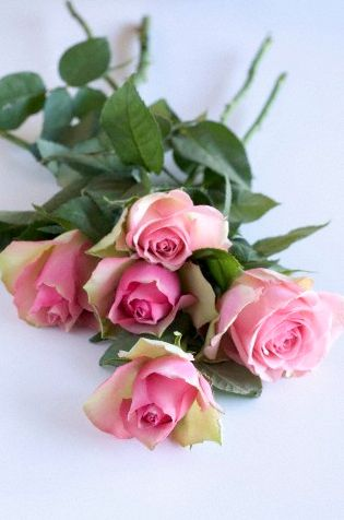 Beautiful long stemmed pink roses