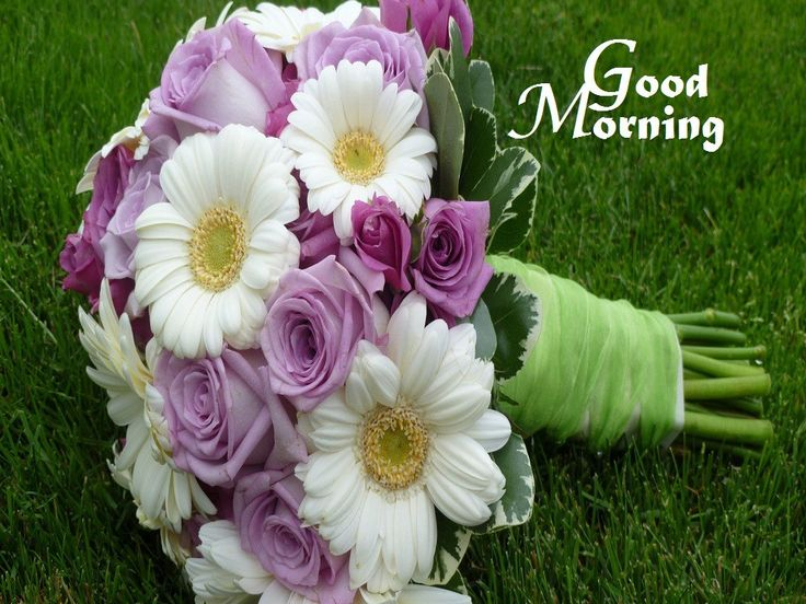 113 best images about Good Morning on Pinterest Latest good morning images, Good morning ...