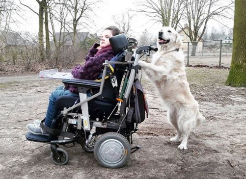 Dogs Truly Are A Man S Best Friend See It Believe It Do It Watch Thousands Of Spinal Cord Injury Videos At Mans Best Friend Pet Care Spinal Cord Injury