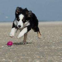 #dogalize In vacanza con il tuo cane: visitare Civitanova Marche #dogs #cats #pets