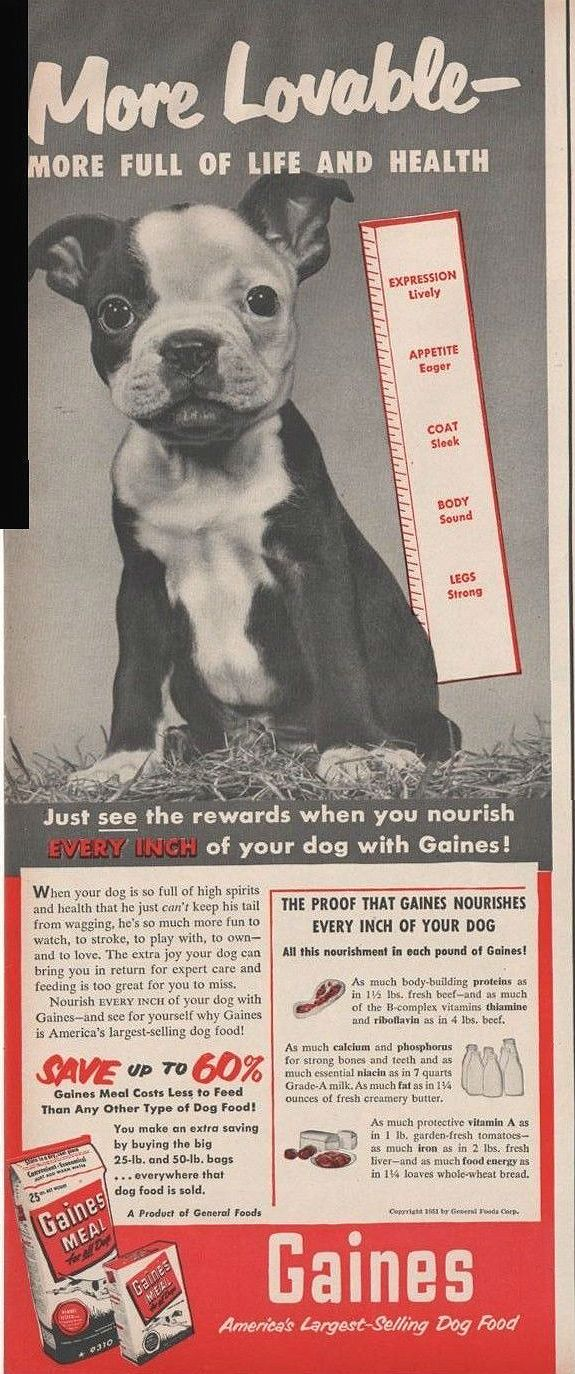 Boston Terrier pup in Gaines dog food ad, 1951