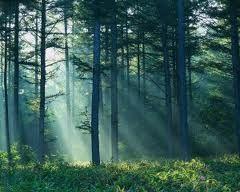 Los bosques caducifolios son muy adecuados para hacer frente a los extremos de las regiones templadas. Después de perder las hojas en invierno (cuando cada ...