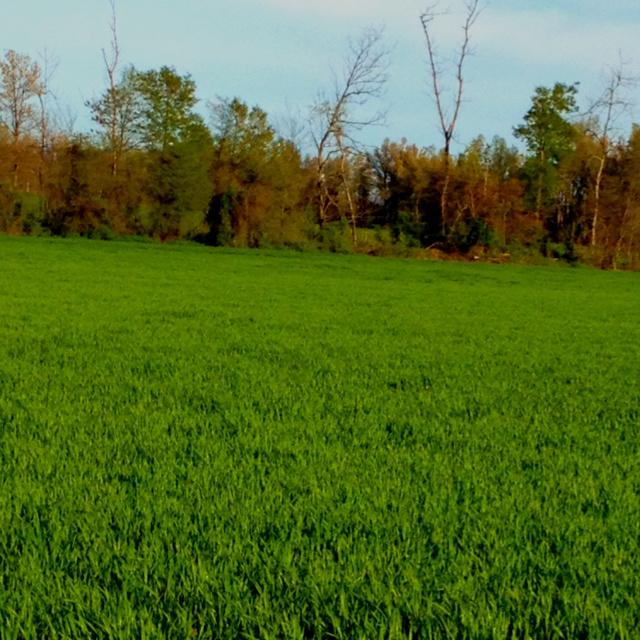 Winter Wheat. Dexter, Missouri: Farms Girls, Favorite Places, Winter Wheat
