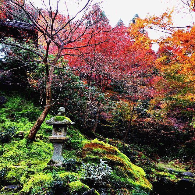地元の方に言わせると今年の紅葉は残念とのことですが、いやいやなかなか。とても素敵でした。 来年も公開されてほしい。 #瑠璃光院 #特別拝観 #11月 #京都 #紅葉 #赤 #紅 #朱 #黄 #緑 #美しい #庭 #庭園 #京都旅行 #旅行 #最終日 #rurikoin #kyoto #autumnleaves #beautiful #gradation #colorful #happy #trip #November #sunday #morning #view #vsco #vscocam